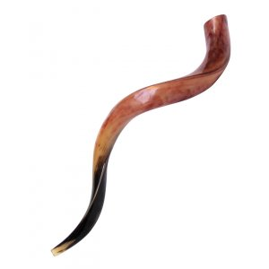 "Large Polished Yemenite Shofar Kudu Horn 33""-36"""