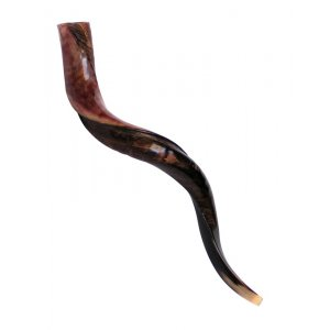 "Medium Yemenite Shofar Half Polished Half Natural - Medium 32""-33"""