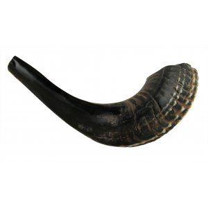 "Black Natural Rams Horn Shofar - Medium 13""-14"""