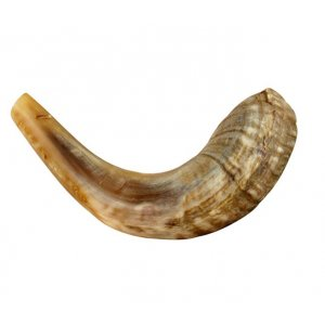 "Medium Natural Rams Horn Shofar 13""-14"""