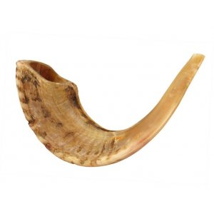 "Natural Rams Horn Shofar - Large size 17""-18"""