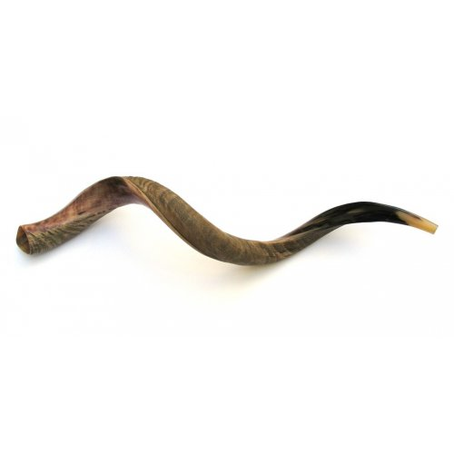 Jumbo Yemenite Shofar Kudu Horn Half Polished Half Natural Finish 49