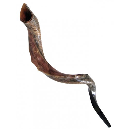 Nostalgia Crown Design Half Natural Half Polished Yemenite Shofar