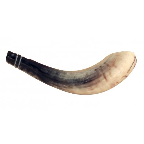 Ram's Horn Shofar Moroccan Style Light Color with Crown Cut 13
