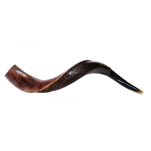 Small Yemenite Shofar Half Polished Half Natural 23
